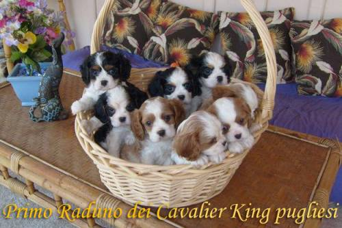 primo-raduno-cavalier-king-pugliesi